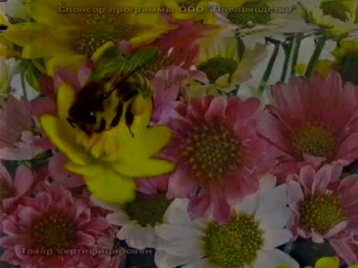 Звездный: магазин пчеловодство в туле